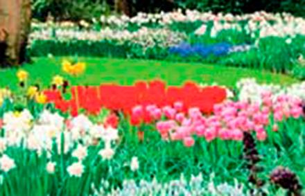 Alla scoperta della terra… e dei suoi splendini giardini!