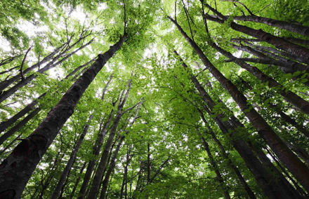 Troverai più nei boschi che nei libri…